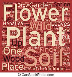 WILD FLOWER GARDEN text background wordcloud concept