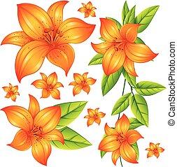 Wild flower in orange color illustration