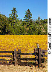 Wild Flower Meadow and Fencing - Yellow Wild Flower Meadow ...