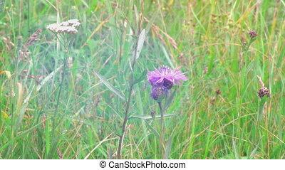 Wild flower on field