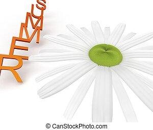 wild flower - chamomile flower field, a useful application...