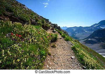 Wild Flower Switchback Corner on steep uphill climb