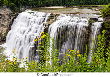 Wild Flowers Along Gorge Near Middle Falls, Letchworth State Park