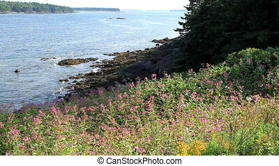 Wild Flowers and Rocky Shore Maine
