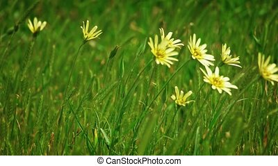 Wild flowers and spikelets waving with wind slomo - Wild ...