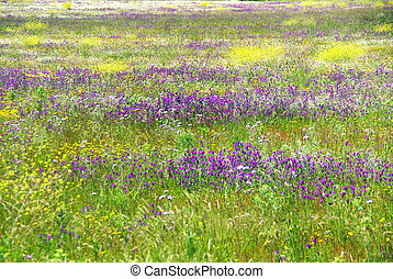 Wild flowers background on portuguese field