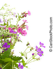 wild flowers bunch isolated on white