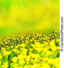 wild flowers buttercups