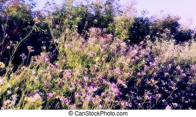 Wild flowers California - Dream like colors wild flowers...