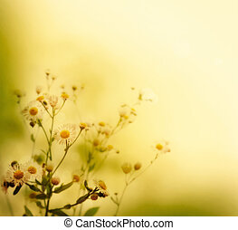 Wild flowers - Fresh wildflowers over colorful background. ...