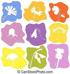 Wild flowers icons set
