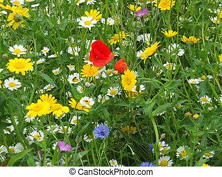 wild flowers in a summer meadow in england