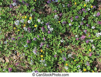 wild flowers in spring background