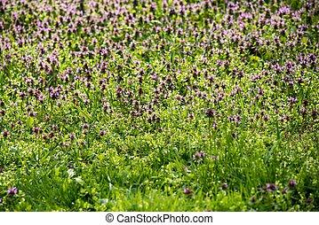 Wild flowers in Spring.