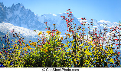 Wild flowers in the Alps