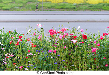 wild flowers in the city