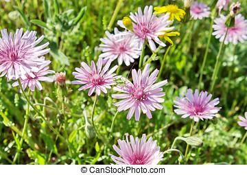 Wild flowers in the field of Greece