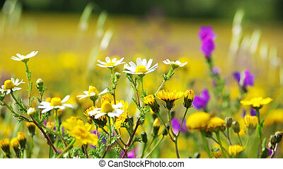 Wild flowers in the field of Portugal.