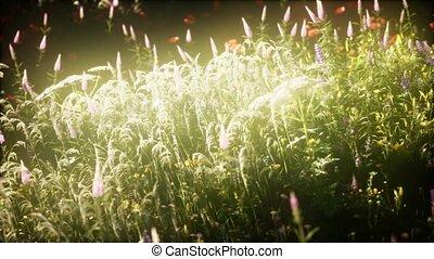 wild flowers in the field