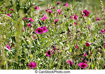 wild flowers in the flowered meadow