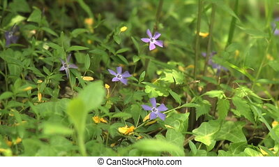 Wild flowers in the forest in sprin