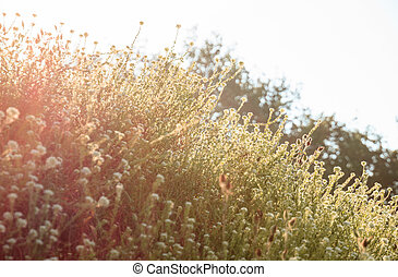 wild flowers in the morning sun