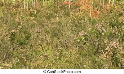 Wild flowers in the national swamp reserve. Autumn daytime. Smooth dolly shot