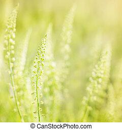 Wild flowers in the sunshine
