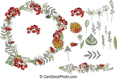 Wild flowers isolated on white background. Autumn berries and asters. Floral elements for your design