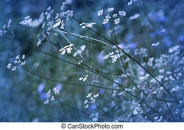 Wild flowers on a meadow