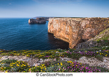 Wild flowers on cliffs in Algarve region, Portugal at summer