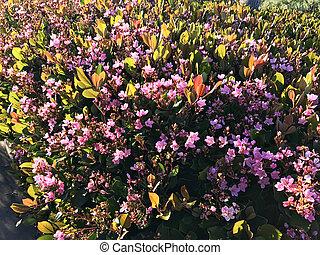 Wild flowers on the malibu beach