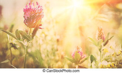 wild flowers on the meadow. Environmental backgrounds