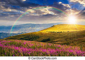 wild flowers on the mountain hill at sunset - landscape with...