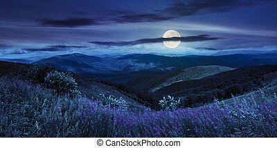 wild flowers on the mountain top at night - composite...