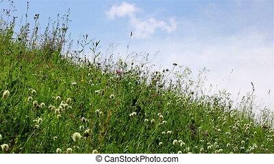 Wild flowers over sky timelapse - A timelapse of wild...