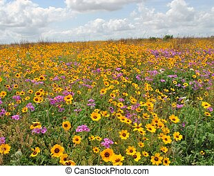 Wild flowers - Yellow wild flowers in Texas at wildlife...