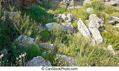 Wild flowers pushing through ruins - Wild flowers and grass...