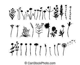 Wild flowers set. Floral silhouettes. Ink drawing. Hand drawn plants. Vector illustration isolated