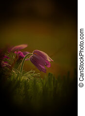 Wild flowers spring bloom in the meadow