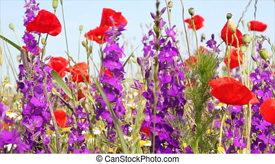wild flowers spring scene