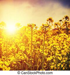 wild flowers under bright summer sun
