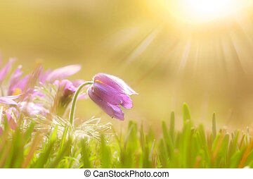 Wild flowers with sun flare