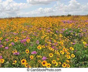 Wild flowers - Yellow wild flowers in Texas at wildlife...