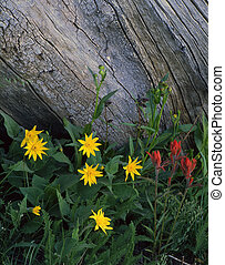 Wild Flowers&Log - Wild flowers growing next to an old log.