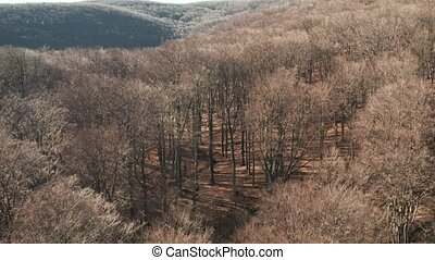 Wild forest, bare tree aerial view