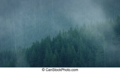 Wild Forest In Heavy Rainfall - Mist moves over forest trees...