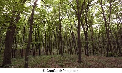 Wild forest land in the park area. Ukraine, Kiev