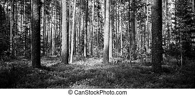 Wild forest panorama