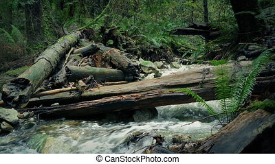 Wild Forest River With Log Over It - River through the woods...
